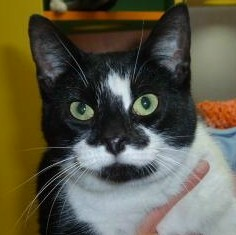 Welland Humane Society Cats For Adoption