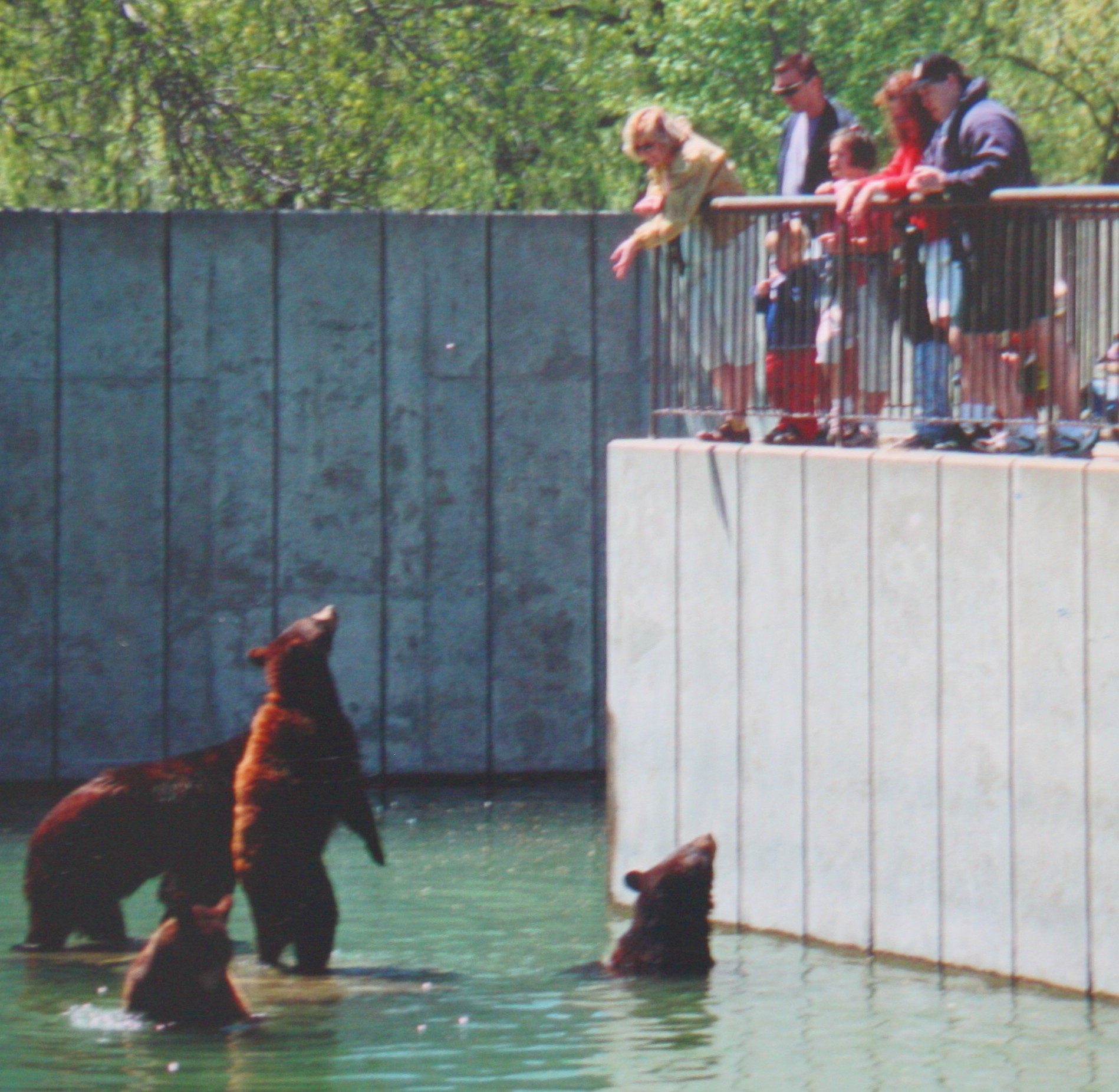The Blame For Marineland Rests With A Public That Flocks ...