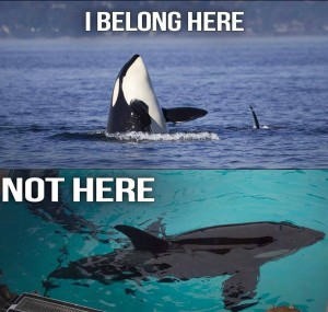 orcas, they should be here not there.