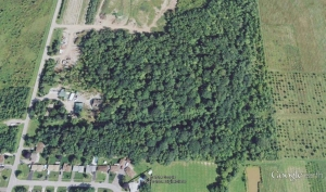 Aireal shot of Irish Grove Forest. A Google image.