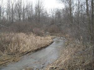 One of numerous Niagara, Ontario wooded and water areas on death row due to continued low density urban sprawl sanctioned by our municipal councils in the region.