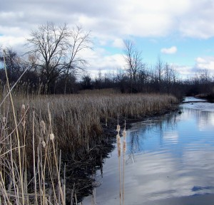"""Only about 10 to 15 per cent of Niagara's wetlands - vital to the survival of many birds, fish and other wildlife - remain in Niagara and a regional 'Conservation Authority"""" is now looking at """"offsetting"""" to make way for development. Photo by Doug Draper"""
