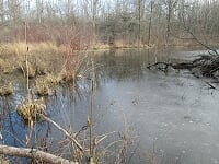 "Don't let the Niagara Peninsula Conservation use something called ""biodiversity offsetting"" to decimate what is left of Niagara's natural wetlands."