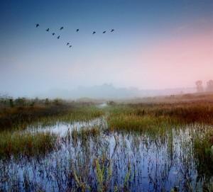 best wetland at dusk
