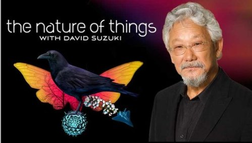 suzuki nature of things