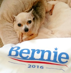 Our NAL mascot is barking for Bernie! She wants all of her Western New York friends and neighbours to vote for him.
