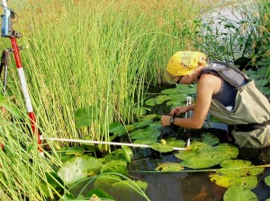Wetland Monitoring in the Great Lakes. An Environment Canada file photo