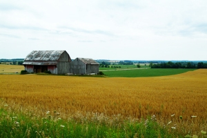 A farm in Ontario's protected Greenbelt zone