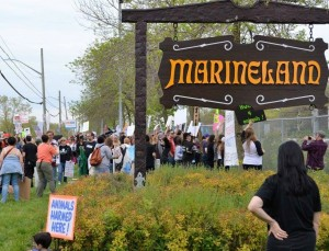 Opening Dayweekend at Marineland in Niagara Falls, May 2016. Photo by George Burkhardt