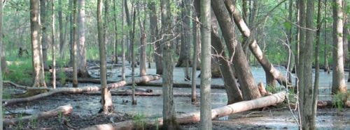 An unprotected wetland area of Thundering Waters Forest