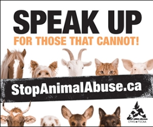 animal-abuse-poster