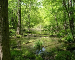 Keeping wetlands in Thundering Waters Forest wet is vital to survival of rich biodiversity in this natural place