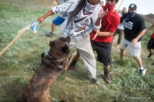 petroleum corporation hires private cops to sick dogs on Native people attempting to stop construction of pipeline earlier this September