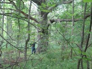 Niagara conservationist John Bacher stands under a giant white oak tree in the Thundering Waters Forest area now being eyed by developers and some Niagara politicians for urban sprawl - a matter that might one day be decided at an Ontario Municipal Board meeting.