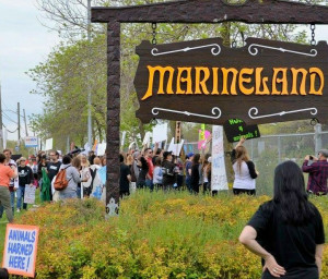 One of many animal activist protests held outside of Marineland's front gates in recent years. File photo by Doug Draper