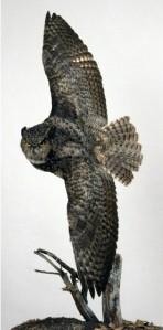 owls_in-flight